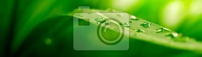 Papiers peints feuille verte, la nature de fond