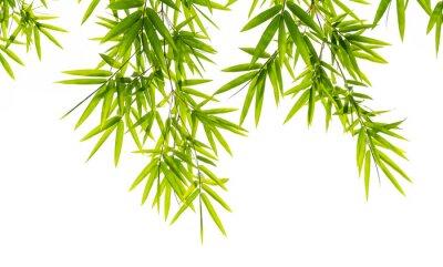 Papiers peints feuilles de bambou isolé sur fond blanc