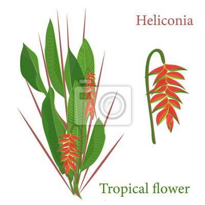 Feuilles De Fleurs Tropicales De Branche Dhéliconia Aquarelle