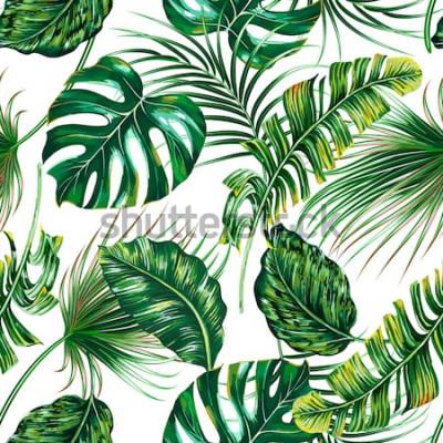 Papiers peints Feuilles de palmier tropical, monstera, fond de jungle feuille vecteur transparente été floral