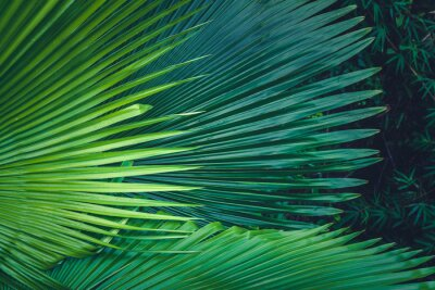 Papiers peints Feuilles de paume fond vert foncé