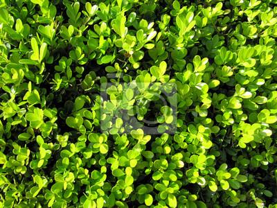 papier peint feuillage vert awesome plante de jungle feuilles sur fond flou ornement naturel la. Black Bedroom Furniture Sets. Home Design Ideas