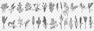 Papiers peints Fields grass and plants doodle set. Collection of hand drawn various grass growing on field blooming in rows isolated on transparent background