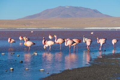 Papiers peints Flamants roses à la Laguna Colorada sur les Andes boliviennes