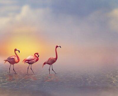 Papiers peints Flamingo Oiseaux