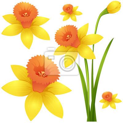 Fleur Jonquille Jaune Couleur Papier Peint Papiers Peints Belle