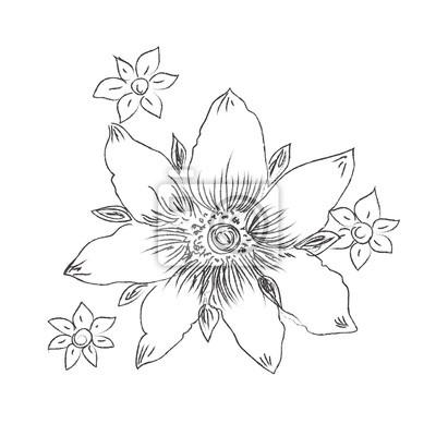 Fleur Main Dessins Croquis Decoratif Vecteur Illustration