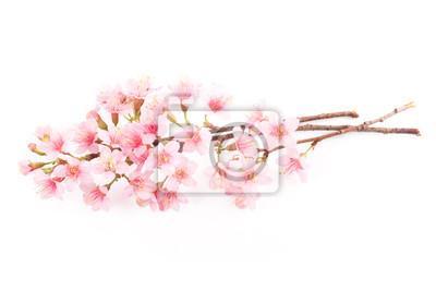 Fleur Rose Cerise Fleurs Sakura Isole Sur Fond Blanc Papier Peint