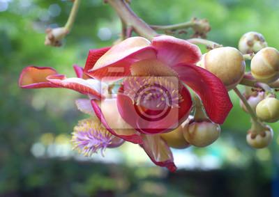 Fleur Rose Plante Nature Printemps Rouge Jardin Fleur Papier