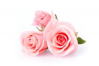 Papiers peints fleur rose sur fond blanc