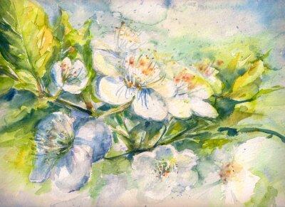 Papiers peints Fleurir, branche, cerise, arbre, aquarelle, peint