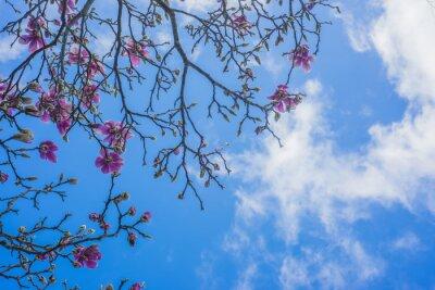 Papiers peints Fleurir, magnolia, arbre