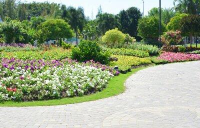 Papiers peints Fleurs colorées dans le jardin