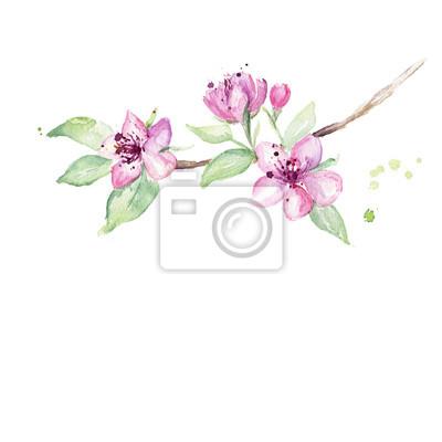 Fleurs Daquarelle Branches De Cerisier Main Dessine Japonais