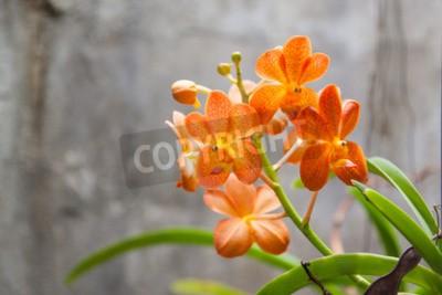 Papiers peints Fleurs d'orchidées d'orange