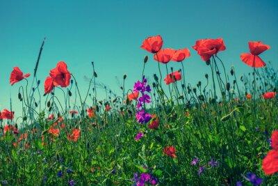 Papiers peints Fleurs de pavot contre le ciel