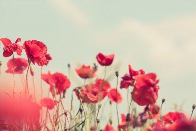 Papiers peints Fleurs de pavot rétro pacifique fond d'été