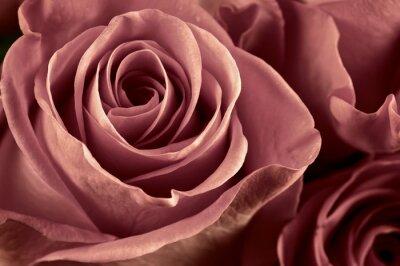 Papiers peints Fleurs Rose close-up