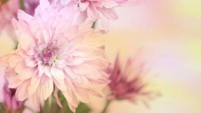 Papiers peints Fleurs roses et jaunes colorées avec une zone pour le texte. Horizontal.