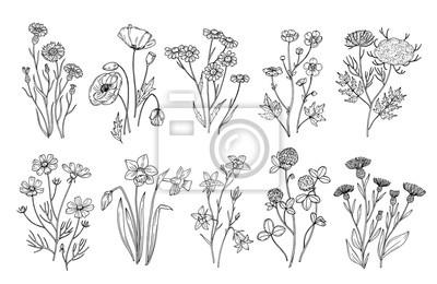 Papiers peints Fleurs sauvages Esquisser des éléments botaniques de la nature des fleurs sauvages et des herbes. Jeu de vector floraison été dessinés à la main de champ. Illustration du champ floral, ligne noire bla