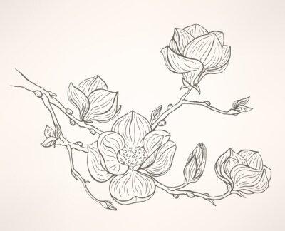 Papiers peints floraison magnolia