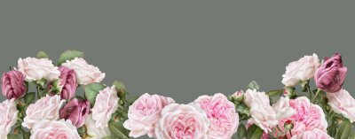Papiers peints Floral banner, header with copy space. Blush pink roses, carmine tulips isolated on warm grey background. Natural flowers wallpaper or greeting card.