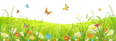 Papiers peints Floral, Été, ressort, pré, vert, herbe, fleurs, papillons
