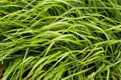 Papiers peints Fond d'herbe verte