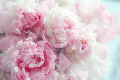 Papiers peints Fond de fleurs de pivoines roses moelleuses