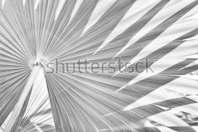 Papiers peints fond de texture de palmier tropical, abstrait rayé de la nature, son noir et blanc