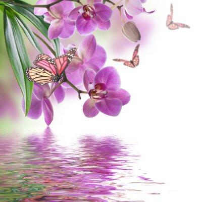 Papiers peints Fond floral d'orchidées tropicales et le papillon