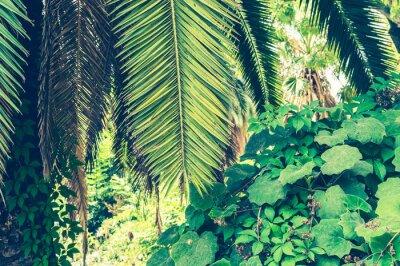 Papiers peints Fond tropical des feuilles de palmier