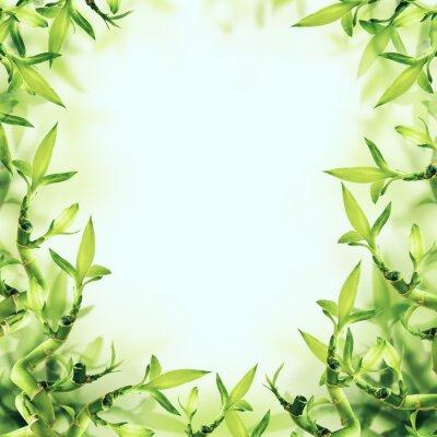 Papiers peints Fond vert de bambou. Spa et santé