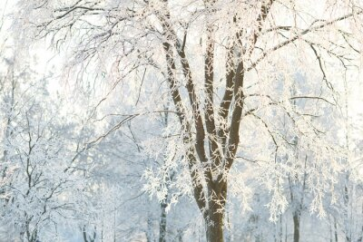 Papiers peints Fonds d'écran arbres avec des branches d'arbres givrés sur un jour d'hiver