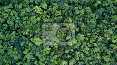 Papiers peints Forest and tree landscape texture background, Aerial top view forest, Texture of forest view from above.