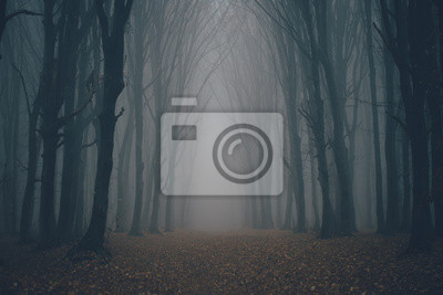 Papiers peints Forest in fog with mist. Fairy spooky looking woods in a misty day. Cold foggy morning in horror forest with trees