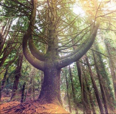 Papiers peints Forêt