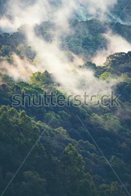 Papiers peints Forêt brumeuse dans les tropiques