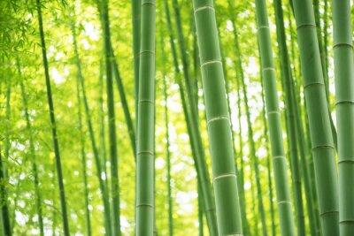 Papiers peints foret de bambou