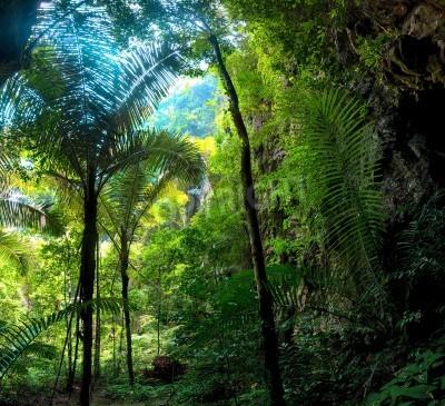 Papiers peints Forêt de la jungle