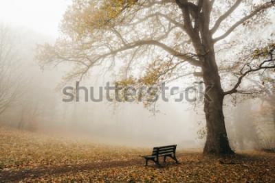 Papiers peints Forêt en automne humeur avec brouillard et soleil