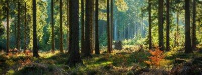 Papiers peints Forêt ensoleillée panoramique en automne