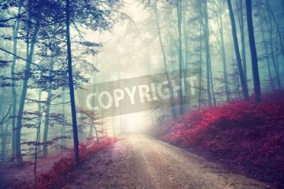 Papiers peints Forêt forestière d'automne sur l'effet de couleur vintage avec lumière fantastique. Effet de filtre vintage utilisé.