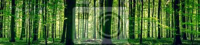 Papiers peints Forêt idyllique au printemps