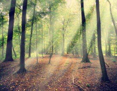 Papiers peints forêt magique dans myst avec rayon de soleil