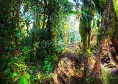 Papiers peints Forêt moussante tropicale fantastique avec des plantes et des fleurs étonnantes. Paysage de la nature pour un fond mystérieux. Malaisie