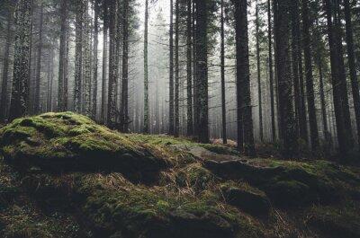 Papiers peints forêt sauvage de paysage avec des arbres de pin et de mousse sur les rochers