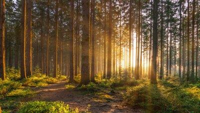 Papiers peints Forêt silencieuse au printemps avec de beaux rayons de soleil