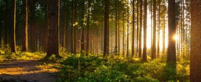 Papiers peints Forêt silencieuse au printemps avec de beaux rayons lumineux