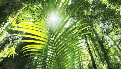 Papiers peints forêt tropicale